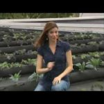 FarmRoof turns Black Roof into Green Roof
