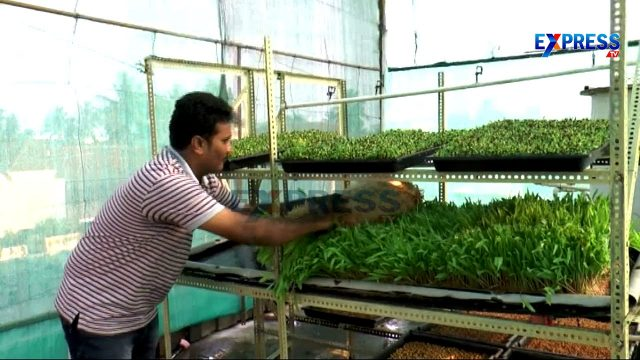 Hydrophonics Fodder production in low cost Technology by N Rama Rao – Express TV