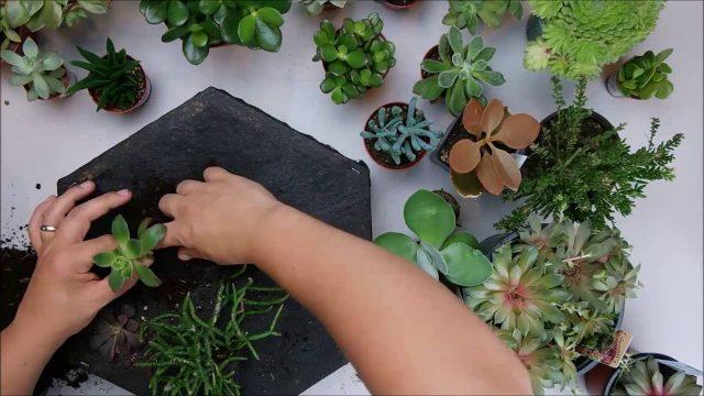 DIY Vertical Hexagon Succulent Planters