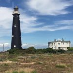 Tough plants for green roofs – Dungeness
