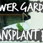 Tower Garden Transplanting Mistakes