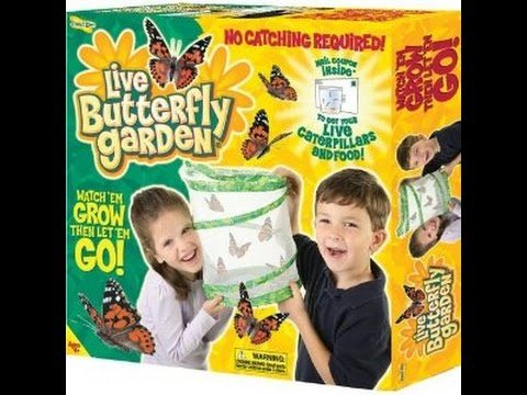 Insect Lore – Butterfly Garden! – buy at Science Store for the Stars