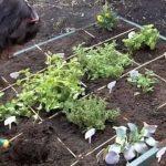 "Slow Food Miami – School Gardens for Kids – ""Teaching"" Gardens"