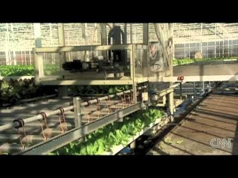 cnn – vertical farming – a farm on every rooftop – earth 2100