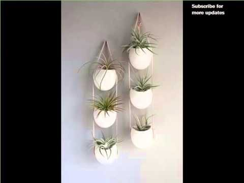 Indoor Wall Hanging Plants | Indoor House Or Office Plants Picture Collection