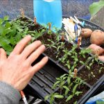 Channel Introduction The Rusted Garden 2017: Over 600 Vegetable Gardening Videos