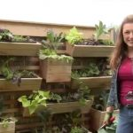 How to Plant a Living Wall Garden on a Fence