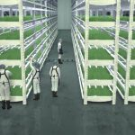 Largest indoor vertical farm uses less water and produces more