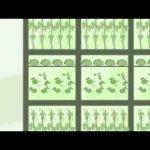 The Future of Food   Vertical Farming, Nanotech   2013
