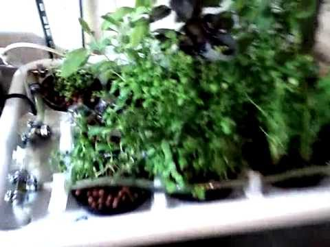 Homemade Hydroponic system – Herb Garden 5-6 weeks