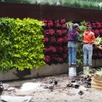 Cara Membuat Vertical Garden