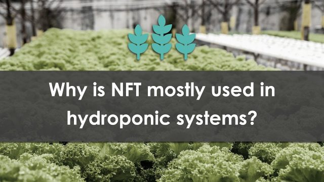 Why is NFT mostly used in hydroponic systems?