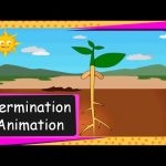 Science – Seed Germination  Animation (From seed to plant)  – English
