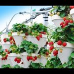 THE BEST AQUAPONICS INDOOR SYSTEM DESIGN YOUTUBE VIDEO