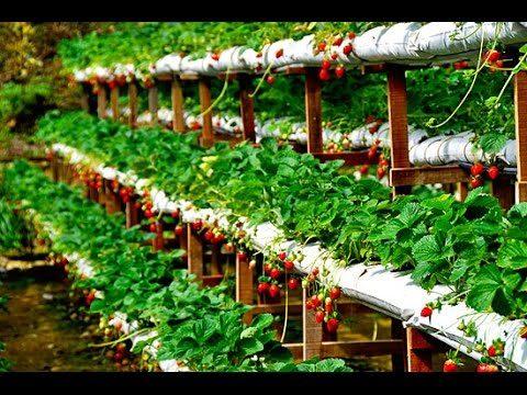 PROFITABLE HYDROPONICS & ORGANIC FARMING IN INDIA – DON'T MISS