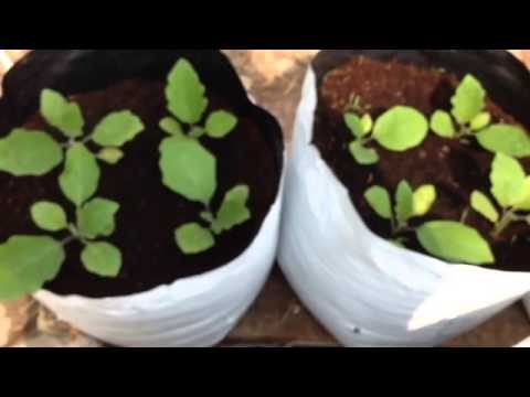 """Do it yourself""  TamilNadu Government program for TERRACE GARDENING"