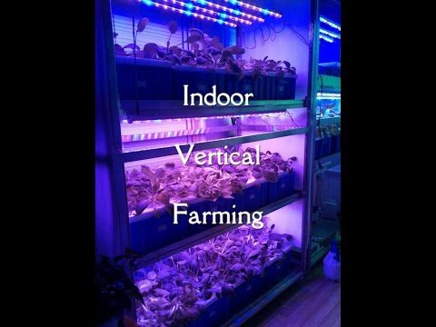 Vertical Indoor Farming – Solving The World's Food Problems