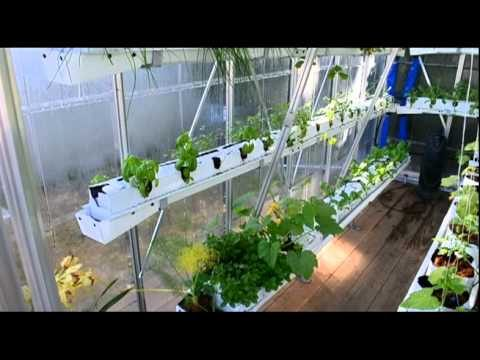 Sustainable urban agriculture hydroponic vegetable greenhouse.dv