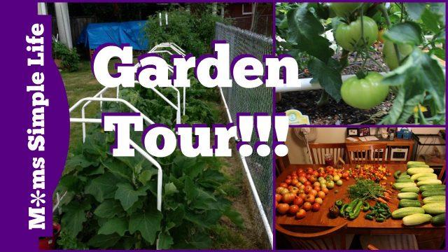 Mittleider and non Mittleider Garden Tour: What worked and what didn't work
