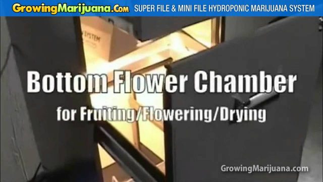 Hydroponic Marijuana Growing Cabinets for Indoor Weed Cultivation