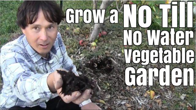 Grow a No Till & No Water Vegetable Garden with Little Effort