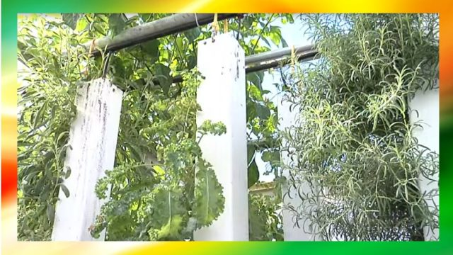 DIY Aquaponics Indoor Systems – (Aquarium Fish Tank, Vertical Farming and Mini Tanks)