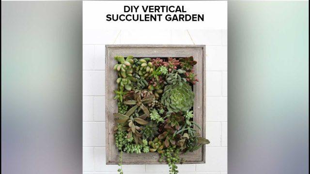 DIY | Vertical Succulent Garden Making | Nifty | 1 Min Craft