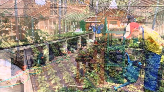 Petty Pool Vocational College: An Introduction to the Horticulture Course