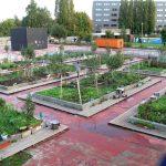 Bangladeshi Roof Garden Video (Jessore)