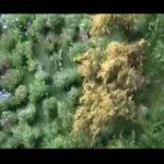 Vertical Garden – Living Wall Patrick Blanc Madrid Spain