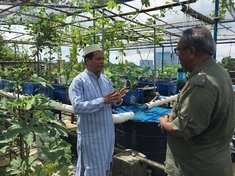 Rooftop farming (EPS 16) ছাদ কৃষি