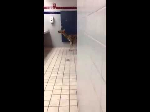 Bambi uses restroom at Maui Lowes store