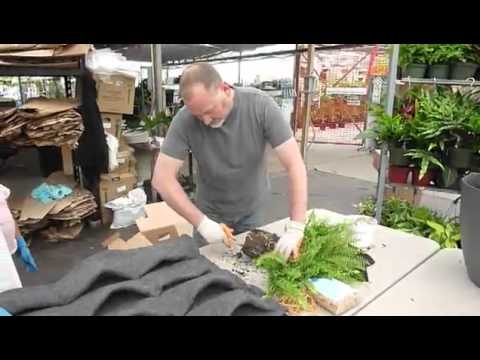 PlantsOnWalls Root Wrapping Demonstration