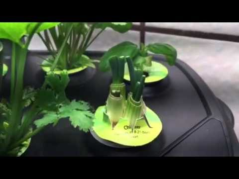 Aero garden . Seed pod kit- miracle grow.Table top hydroponic kit,