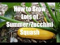 How To Grow LOTS of Summer/Zucchini Squash  – in 4K