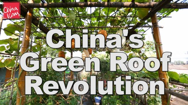 China's Green Roof Revolution   A China Icons Video