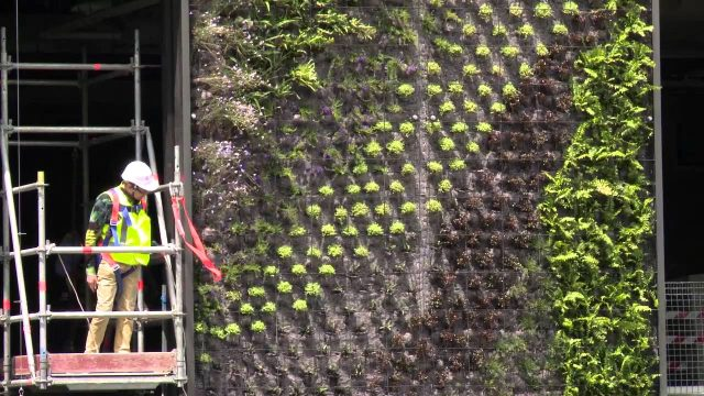 Patrick Blanc talks about vertical gardens at One Central Park November 2012