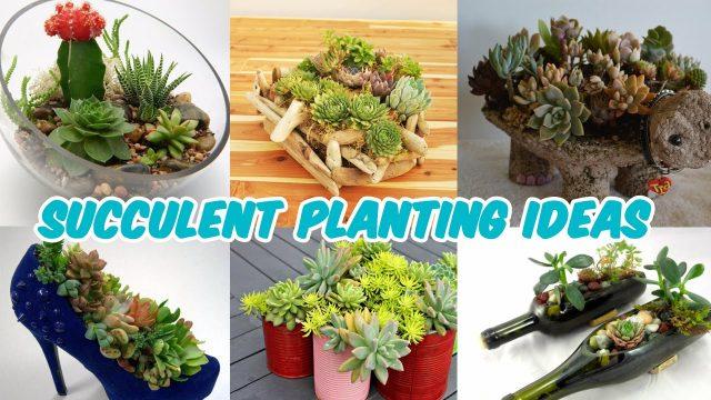 Amazing Succulent Planting Ideas