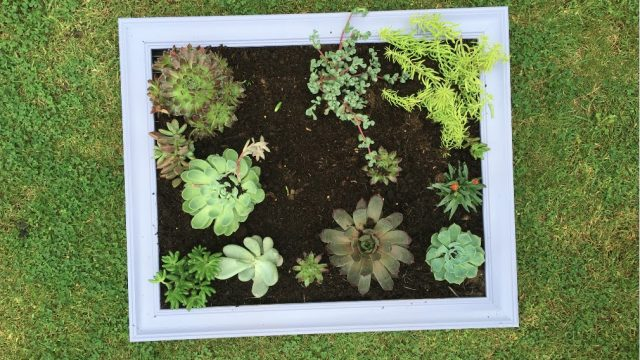 Making a Succulent Frame