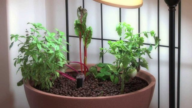 Small Aquaponic Indoor or Patio Mini Garden