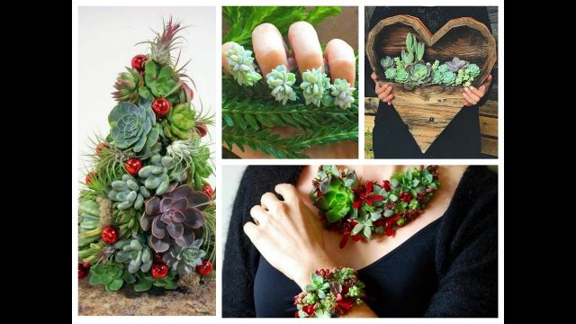 DIY Succulents Crafts Ideas – Amazing Succulent Planting Projects