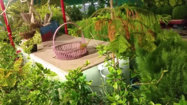 2 – How To Setup Rooftop & Kitchen Garden Sept-12- 2016 (URDU/HINDI)