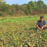 Vegetable Gardening : How to Grow Sweet Potatoes