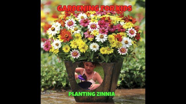 Kids Gardening (Planting Zinnia) Part 1