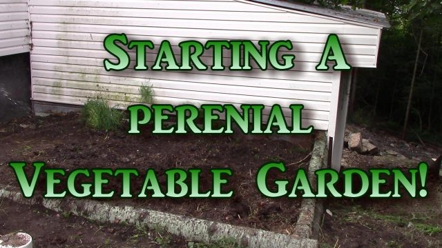 A Perennial Vegetable Garden!