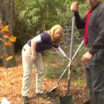 Wild Wednesday: The education of trees part 5 – the circle of life