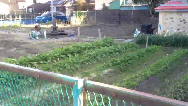 Kid's Garden at a Japanese Elementary School