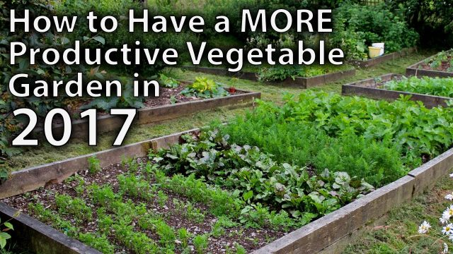 10 Ways to Make your Vegetable Garden More Productive in 2017…and Beyond!