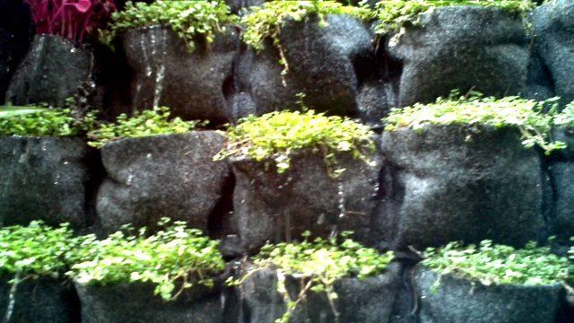 Muros Verdes o Jardines Verticales Siempre Vivos