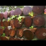 Ideas para tener jardines verticales en su hogar